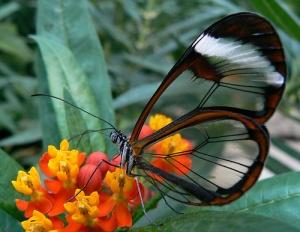 Приказка за пеперудата