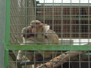 Маймуни на път - Джани Родари