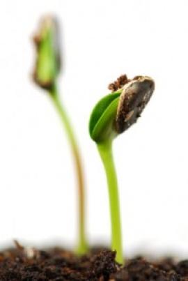 Покълнали семена-достъпно богатство от природата